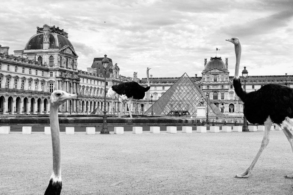 Pendant ce temps suspendu du premier confinement, je suis partie à la recherche de tous ces animaux qui semblaient avoir repris possession de leur territoire, ou plutôt du nôtre : la ville!  La presse évoquait l'apparition de lièvres, de renards, de cerfs et de biches déambulant librement dans les rues des villes, la réalité s'est avérée toute autre. Mis à part quelques canards, pigeons et moineaux, Paris restait déserte et muette.  L'idée s'est imposée, si je désirais voir surgir ce monde imaginaire et magique où tout un bestiaire d'espèces rares et menacées s'inviterait dans les rues de Paris en visiteurs inattendus, il fallait donc l'inventer et tenter de répondre ainsi aux attentes de ce fantasme collectif.  Je me suis alors souvenu de photos d'hier réalisées au Parc Zoologique de Paris que j'ai complétées par de nouvelles images prises le jour même de la réouverture officielle du Parc Zoologique de Paris le 8 juin 2020.  Ainsi l'histoire de ces bêtes extraordinaires dans Paris pouvait être racontée…  * Les Zoonoses sont des maladies ou infections qui se transmettent des animaux vertébrés à l'homme et vice versa. Les pathogènes en cause peuvent être des bactéries, des virus ou des parasites. Ou plutôt l'inverse, je ne sais plus ?! Animaux rares et espèces menacées échappés du zoo de Vincennes s'étaient invités dans Paris. A travers ZOOnose j'ai tenté de recréer l'imaginaire collectif pendant ce premier confinement.  Les Zoonoses sont des maladies ou infections qui se transmettent des animaux vertébrés à l'homme et vice versa. Les pathogènes en cause peuvent être des bactéries, des virus ou des parasites.