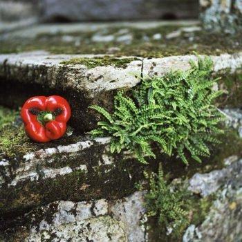 Les Fruits de mon imagination Part 2